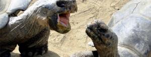 En skildpadde truer